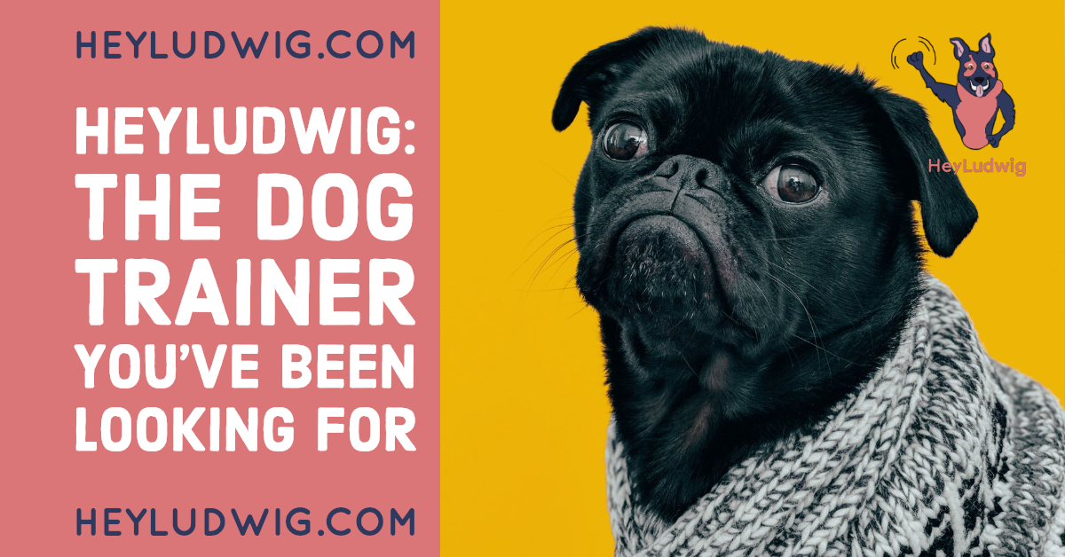HeyLudwig: The Dog Trainer You've Been Looking For